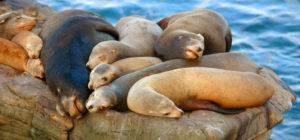 Cleveland Storrs Seals