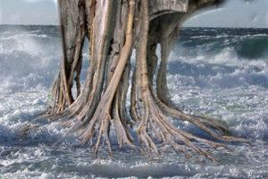 TREE  72jpg copy
